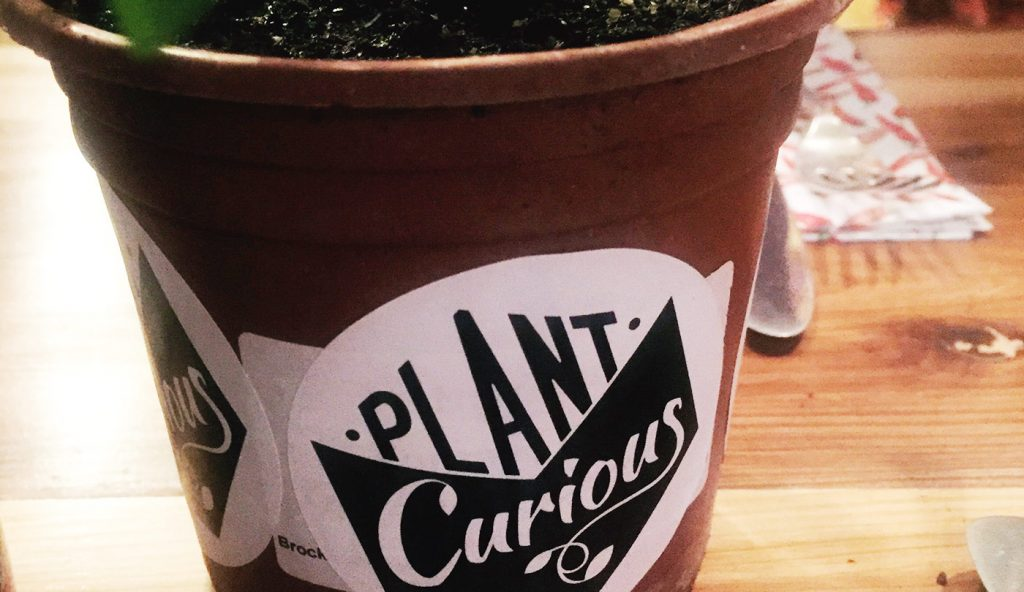 plant curious
