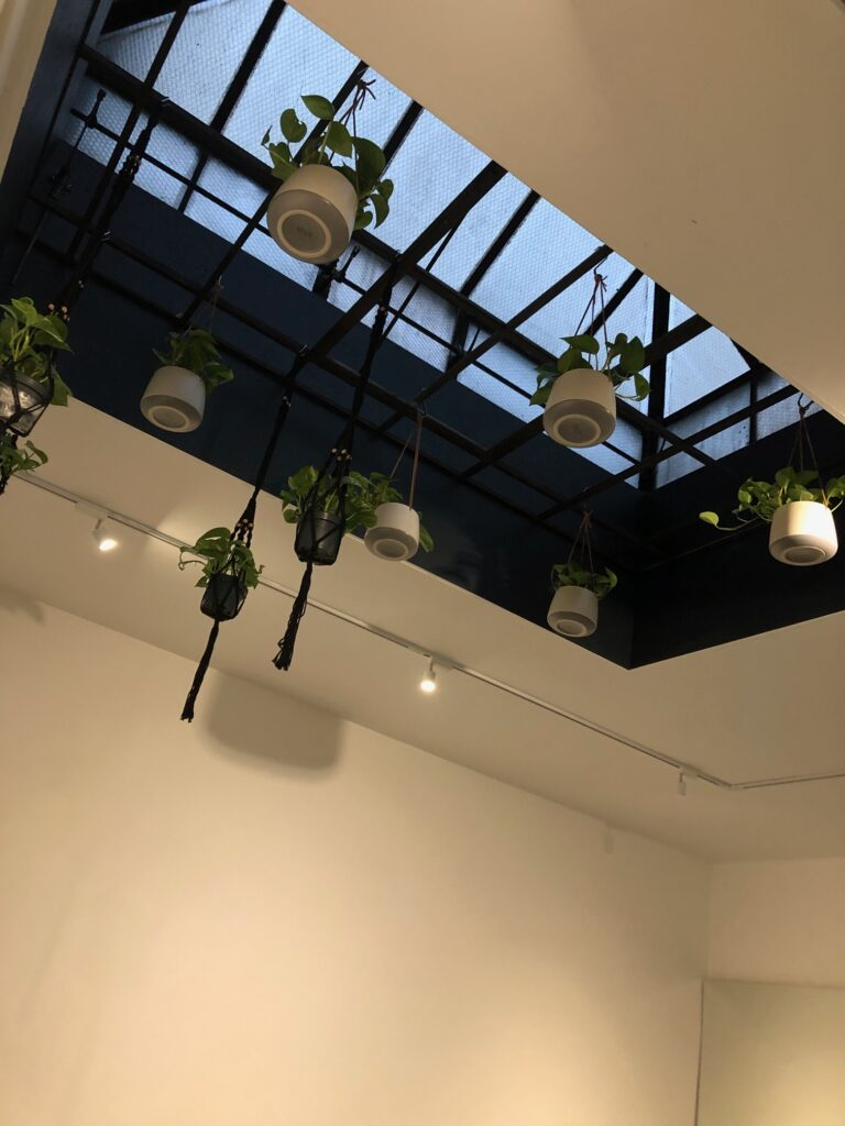 Plants hanging from the ceiling at the NRG barrebody studio